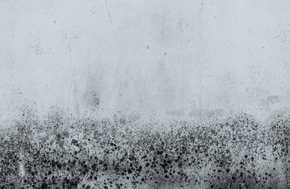Black and white old concrete wall texture background. Background for dead, sad, hopeless, lament, grief, and despair cpncept. Dirty white cement wall with black dot pattern of mold plaque.